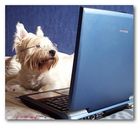 Dog on the Computer