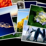 Photo Collage Screensaver for Windows